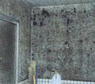 カビ(浴室)